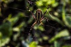 En spindel Royaltyfri Fotografi