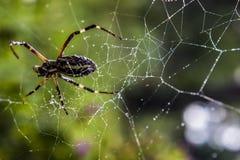 En spindel Arkivfoto