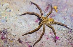 En spindel i löst royaltyfri foto