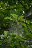 En spindelrengöringsduk royaltyfri fotografi