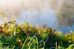 En spindelrengöringsduk i morgonen med solen rays Royaltyfri Foto