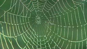 En spindelrengöringsduk med ottadaggdroppar, kuggefokus lager videofilmer