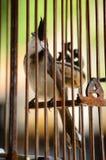 En sprundtappfågel Royaltyfri Bild