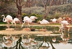En ställning av flamingo Royaltyfria Bilder