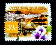 En stämpel som skrivs ut i Australien, visar en bild av den saltvattens- krokodilen på värde på cent 20 Royaltyfria Foton