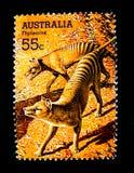 En stämpel som skrivs ut i Australien, visar en bild av den Tasmanian tigern för Thylacine på värde på cent 55 Royaltyfri Bild