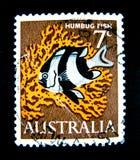 En stämpel som skrivs ut i Australien, visar en bild av Humbugfisken på värde på cent 7 Arkivbilder