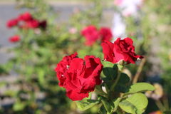 En stängd sikt av blomman royaltyfria foton
