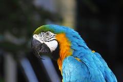 En stående av en härlig papegoja Arkivbild