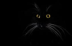En stående av en svart katt i ett mörkerrum Royaltyfri Bild