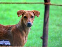 En stående av en hund royaltyfria bilder