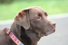En stående av hunden Royaltyfri Bild
