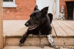 En stående av en lycklig hund fotografering för bildbyråer