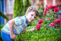 En stående av en pojke som ler och luktar en ros på varm sommardag Den förtjusande ungehållen steg, i hans händer och att se på d arkivfoton
