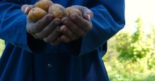 En ståendegrabb en bonde i en sugrörhatt, i ämbetsdräktskjorta gräver upp en potatis lager videofilmer