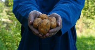 En ståendegrabb en bonde i en sugrörhatt, i ämbetsdräktskjorta gräver upp en potatis arkivfilmer
