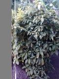 En större lite växt… Royaltyfria Bilder