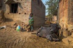 En stam- kvinna står bredvid en bunden buffel på hennes by i Bankura, västra Bengal royaltyfria foton