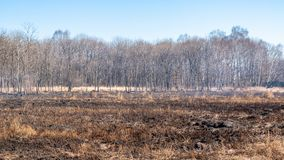 En stark brand fördelar i vindkast av vind till och med torrt gräs royaltyfri bild
