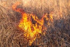 En stark brand fördelar i vindkast av vind till och med torrt gräs arkivfoto