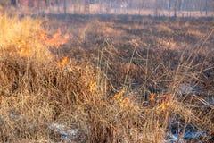 En stark brand fördelar i vindkast av vind till och med torrt gräs royaltyfria foton