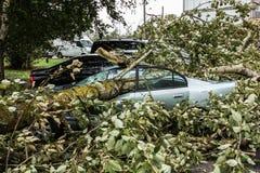 En stark vind bröt ett träd som avverkar på bilen parkerat närliggande arkivbilder