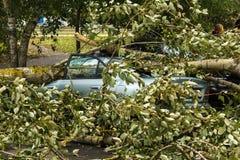 En stark vind bröt ett träd som avverkar på bilen parkerat närliggande royaltyfria bilder