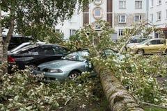En stark vind bröt ett träd som avverkar på bilen parkerat närliggande royaltyfri bild