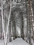 En stationnement de l'hiver. Photo stock