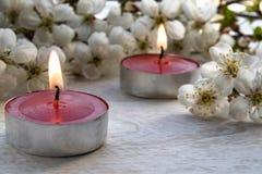 En stearinljus står på en trävit tabell nära filialerna av vita blommor av körsbäret arkivfoto