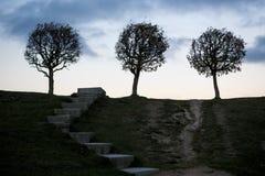 En stege till träd, till himmel, mystik arkivfoto