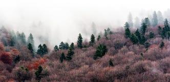 En stillsam plats med granträd och mist Royaltyfria Bilder