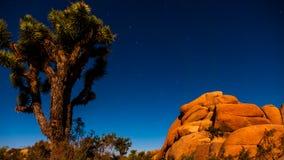 En stjärnklar natt i Joshua Tree National Park Arkivfoton