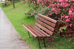 Stol i parkera Royaltyfria Bilder