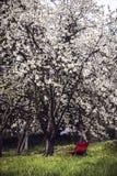 En stol under körsbäret Arkivfoto