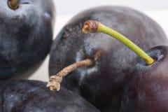 En stor bild av plommonfrukt begränsande djup av fältet arkivfoton
