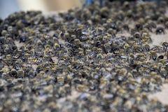 En stor blodstockning av bin på ett ark av papp Svärma av bina biet detailed honung isolerade makroen staplade mycket white Arkivfoton