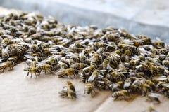 En stor blodstockning av bin på ett ark av papp Svärma av bina biet detailed honung isolerade makroen staplade mycket white Royaltyfria Foton