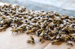 En stor blodstockning av bin p? ett ark av papp Sv?rma av bina arkivfoton