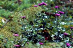 En stor droppe av vatten på sidorna av växter Förvånansvärt kall morgon royaltyfria bilder