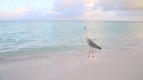 En stor fågel håller ögonen på över vattnet arkivfilmer