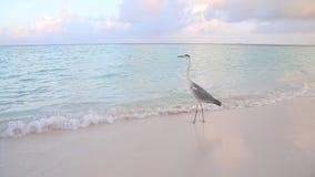 En stor fågel håller ögonen på över vattnet lager videofilmer