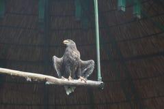 En stor fågel i zoo royaltyfri foto