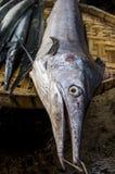 En stor fisk i Myanmar Arkivbilder
