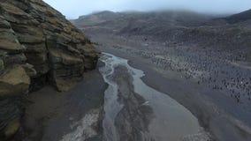 En stor flock av pingvin går mellan bergen Andreev arkivfilmer