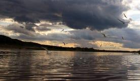 En stor flod med en flygaseagull royaltyfria bilder