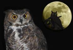 En stor Horned Owl Pair och måne mot svart Royaltyfri Foto