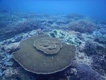 En stor korallrev royaltyfri fotografi