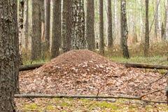 En stor myrstack Royaltyfri Fotografi