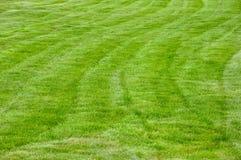 En stor och ren gr?smatta royaltyfri fotografi